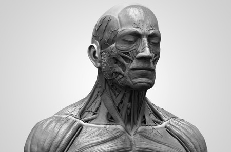 anatomically: Human body anatomy - muscle anatomy of the face neck and chest in realistic 3d rendering