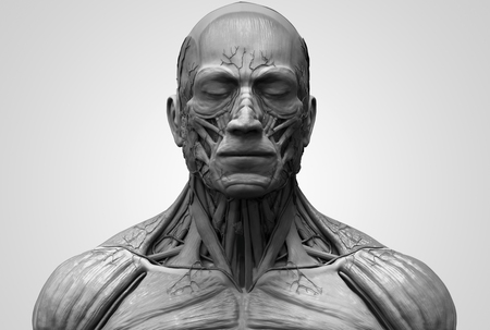 Human body anatomy - muscle anatomy of the face neck and chest in realistic 3d rendering