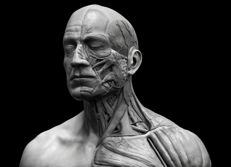 flesh surgery: Human body anatomy - muscle anatomy of the face neck and chest in realistic 3d rendering