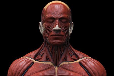Der Menschliche Körper Anatomie - Muskel Anatomie Des Gesichts Hals ...