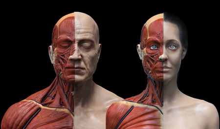 skull biology: male and female anatomy background , medical reference image , muscle anatomy of the face neck chest and shoulder ,realistic 3D rendering