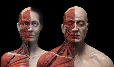 anatomically: male and female anatomy background , medical reference image , muscle anatomy of the face neck chest and shoulder ,realistic 3D rendering