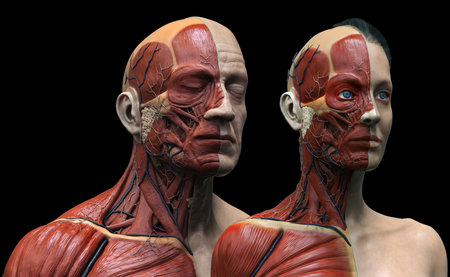 Human body anatomy , male and female anatomy background  , muscle anatomy of the face neck chest and shoulder ,realistic 3D rendering