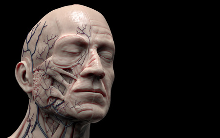 flesh surgery: Head anatomy isolated , medical image reference of human anatomy , realistic 3D rendering Stock Photo