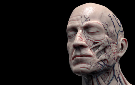 reference: Head anatomy isolated , medical image reference of human anatomy , realistic 3D rendering Stock Photo