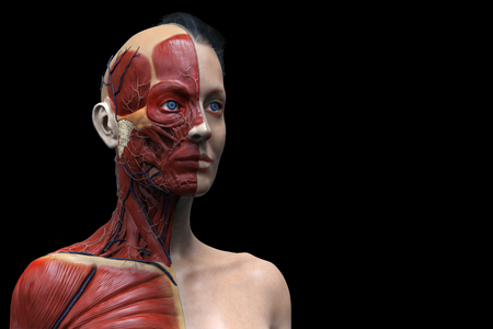 Female Anatomy Of The Head Neck And Chest Medical Background