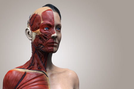 woman muscle: Human body anatomy of a female ,woman muscular anatomy isolated , 3d render of the face neck and chest Stock Photo