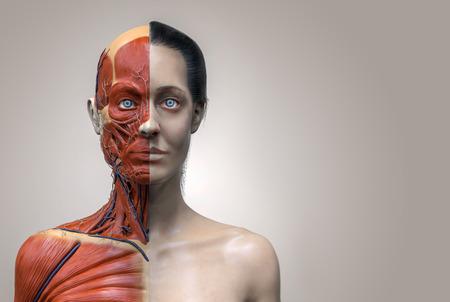 Der menschliche Körper Anatomie einer Frau, Frau muskulösen Anatomie isoliert, 3d des Gesichts Hals und Brust machen
