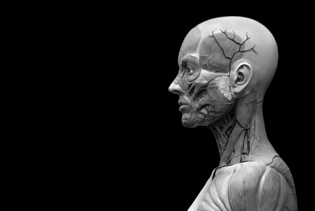 human face: Human body anatomy of a female - muscle anatomy of the face neck and chest , medical image reference of human anatomy in 3D realistic render isolated
