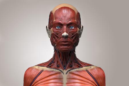 Menselijke anatomie van een vrouw - spier anatomie van het gezicht nek en borst, medische beeldverwerking verwijzing van de menselijke anatomie in 3D realistisch render geïsoleerde Stockfoto