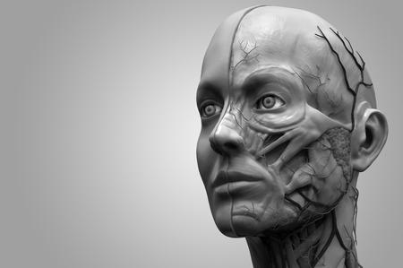 Human body anatomy - head anatomy of a female Standard-Bild