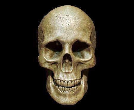 Cráneo aislado en el fondo 3d render
