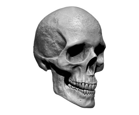 Skull isolated in background3d render Stock Photo - 133329256