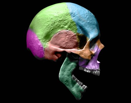 Skull isolated in background3d render Stock Photo - 133329275