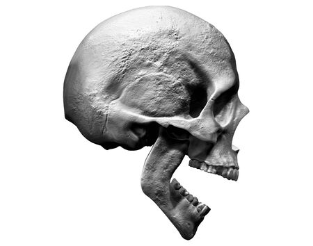 Skull isolated in side view 3d illustration