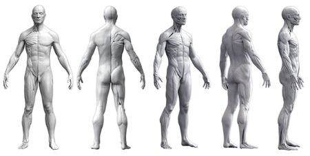 Human body anatomy of a man in five views isolated in white background - 3d rendering