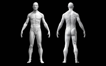 Human body anatomy of a man in two views isolated in black background - 3d rendering