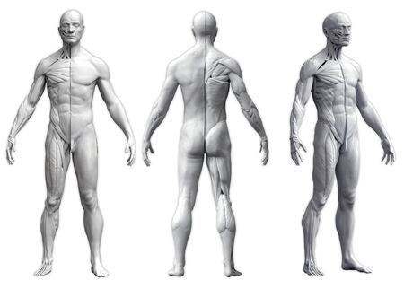 Human body anatomy of a man in three views isolated in white background - 3d rendering