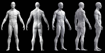 Human body anatomy of a man five views isolated in black background - 3d rendering