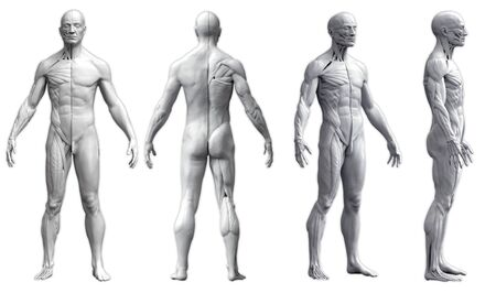 Human body anatomy of a man in four views isolated in white background- 3d rendering Zdjęcie Seryjne