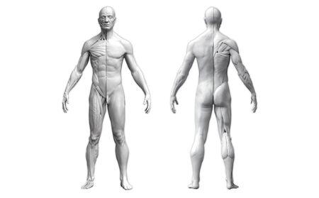 Human body anatomy of a man in two views isolated in white background - 3d rendering