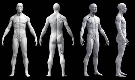 Human body anatomy of a man in four views isolated in black background- 3d rendering