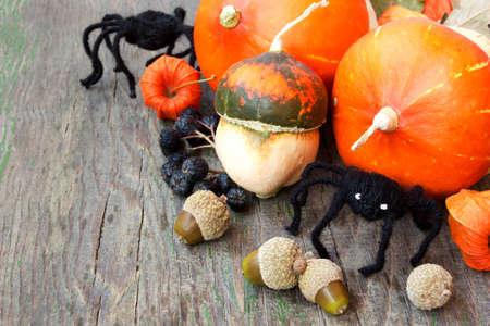 pumpkins, nuts, cape gooseberries, spiders  halloween still life photo