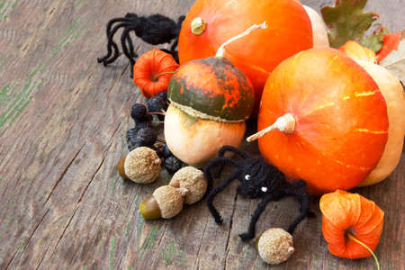 spiders, pumpkins, nuts, cape gooseberries  halloween still life photo