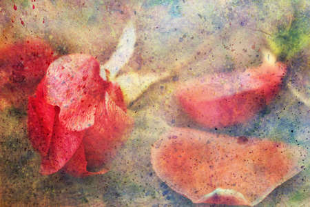 artwork with lovely rose and watercolor splashes  photo