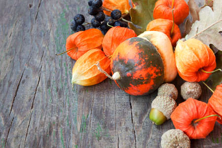 autumn harvest  pumpkins, nuts, cape gooseberries  photo