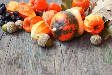 autumn crop  pumpkins, nuts, cape gooseberries photo