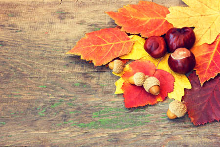 beautiful colorful autumnal leaves and nuts on a wooden background  photo
