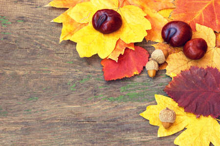 beautiful autumnal leaves and chestnuts  photo