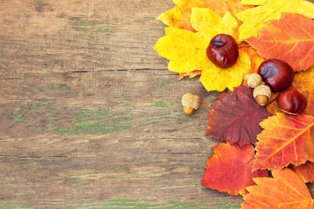 chestnuts and colorful autumnal leaves on a wooden background  photo