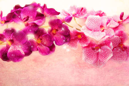 beautiful orchid flowers on sparkling background  photo