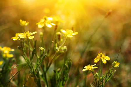 Cute yellow flowers in a wild field stock photo picture and royalty cute yellow flowers in a wild field stock photo 27006799 mightylinksfo