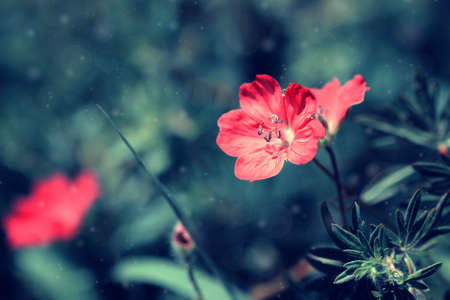 lovely pale red flower on a meadow  photo