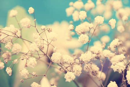 airy: airy vintage small white flowers