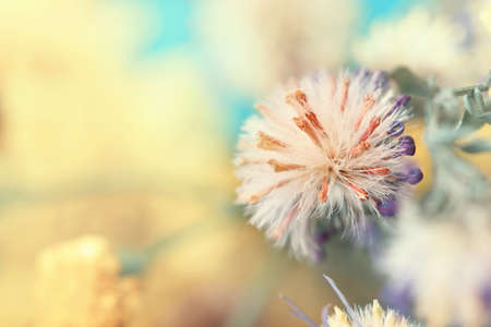 withered flower: withered flower bud close up  Stock Photo