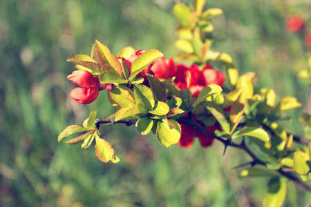 blooming branch with red flowers photo