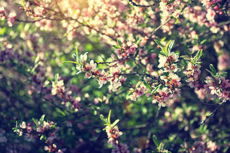 sunlit branches with pink flowers photo