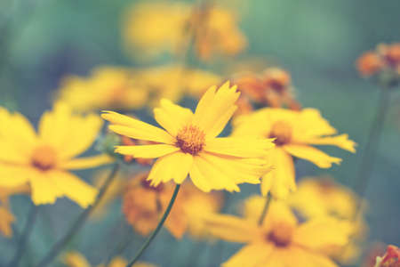 lovely yellow summer flowers in a fog photo