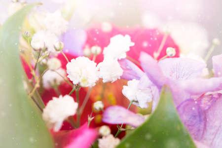 trembling: tender spring flowers