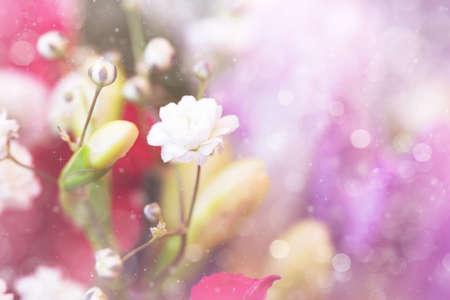 lovely: lovely white small flowers
