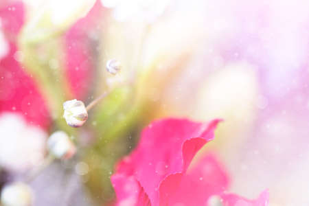 gentle: gentle spring floral background Stock Photo