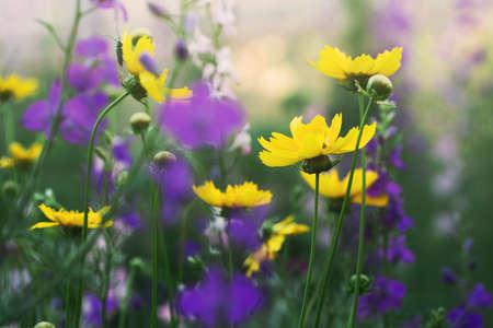 outdoor shot: flowers in a meadow, outdoor shot Stock Photo