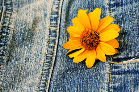blue denim: blue denim texture with yellow flower