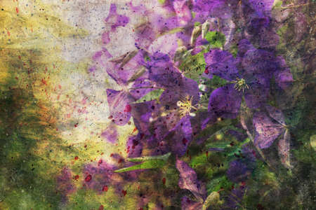 clematis: artwork with clematis flowers
