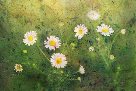 chamomiles: artwork with tender chamomiles and watercolor splashes