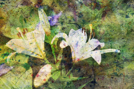 white lily: white lily flowers and watercolor spatter Stock Photo